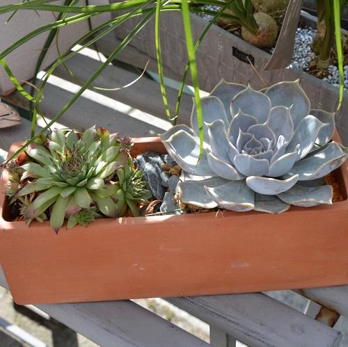 Cactus and Succulent Dish Gardens