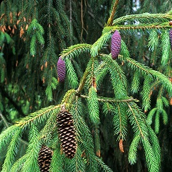 A Closer Look: Pinetum Tour