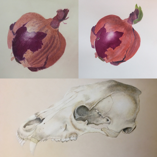 CANCELLED: Natural History Illustration: Watercolor Focus