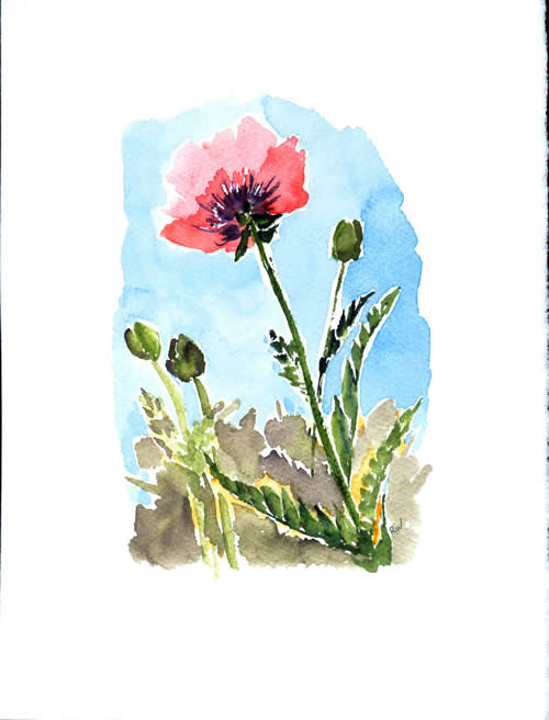 Art Exhibit: Local Wonders:  Nature in Watercolor and Ink by Rosemary Washington