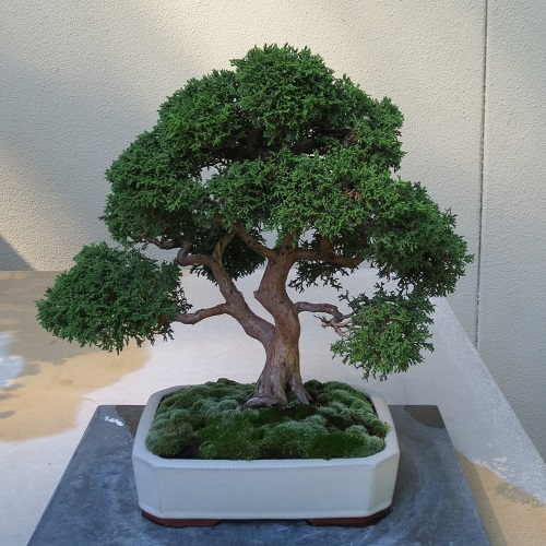 Class Full: Bonsai 101: It's Easier Than You Think!