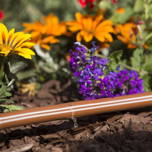 Designing Drip Irrigation
