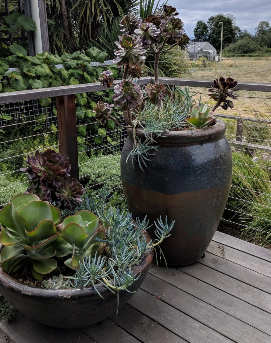 Moving Outdoor Plants in for the Winter (online)