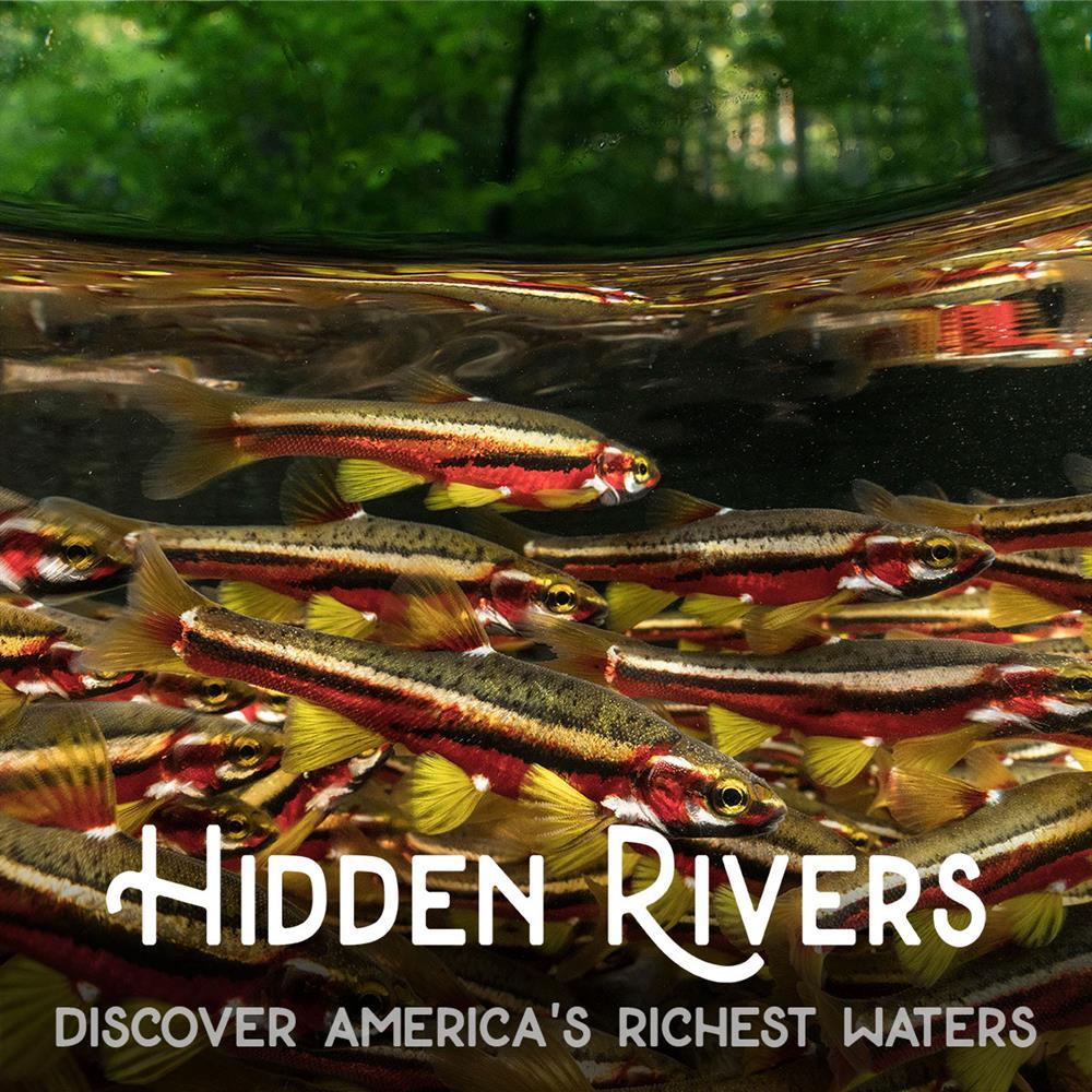 Screening of Hidden Rivers