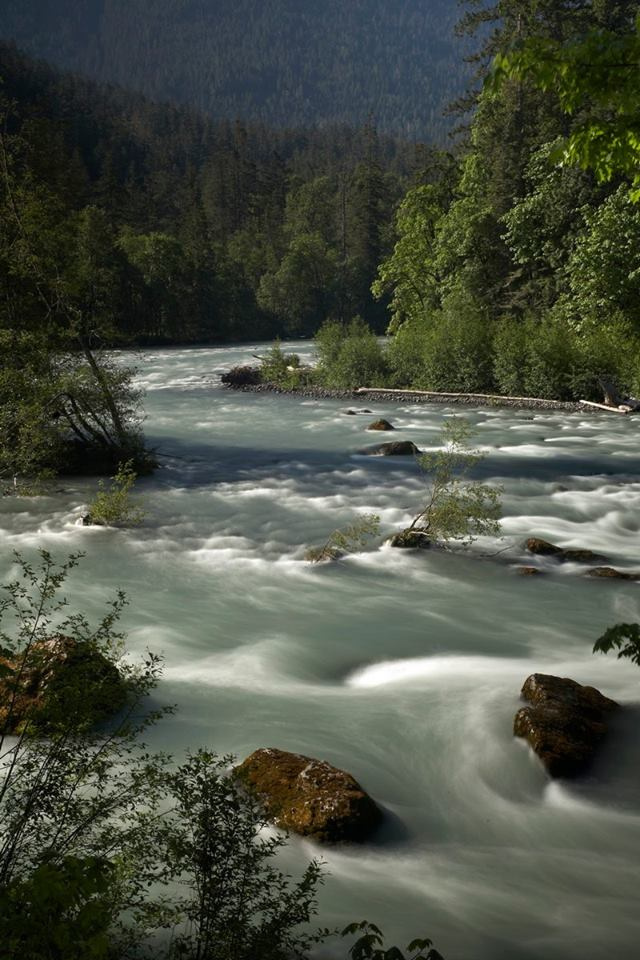 FREE Film Screening: Return of the River & Making Way for Salmon