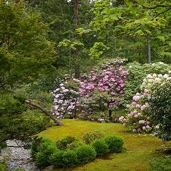 Master Pruner Series - Japanese Garden Pruning
