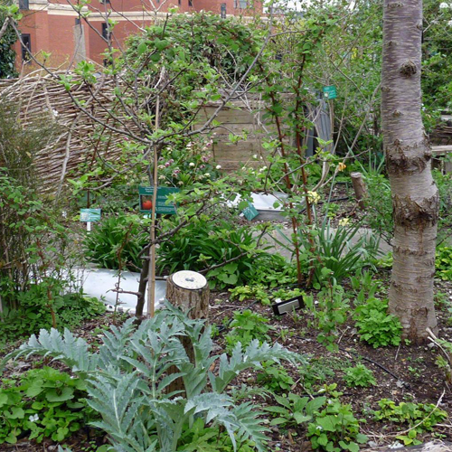 ONLINE: Introduction to Permaculture