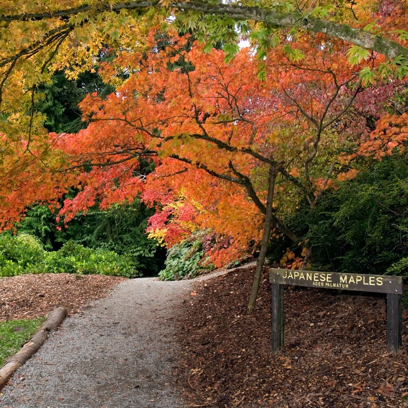 ONLINE: Plant CSI: Why Does my Japanese Maple Look so Bad?