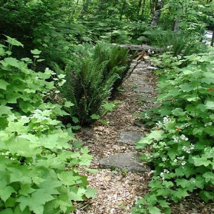 Using Native Plants in the Landscape
