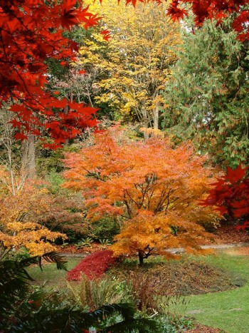 Curator Tour: Fall Color in the Arboretum (online)