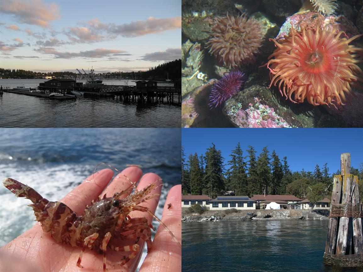 Exploring Friday Harbor Laboratories Info Session