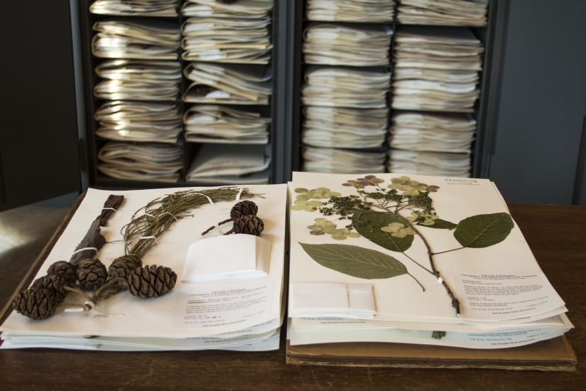 Lecture: Herbarium Specimens Reveal Powerful and Sometimes Disturbing History presented by Eve Rickenbaker