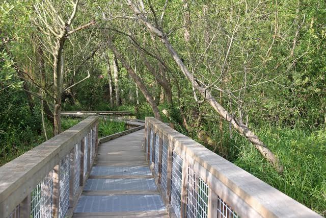 Neighborhood Exchange: Yesler Swamp Restoration and Boardwalk